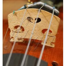 Calus Gliga vioara (maestru)